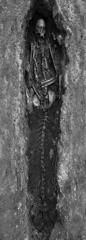 Zeemeer skelet