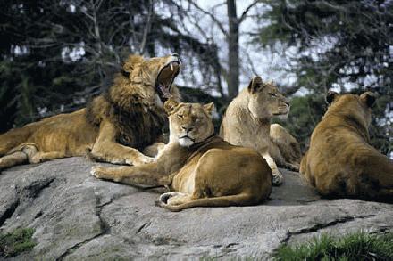 Leeuwen familie