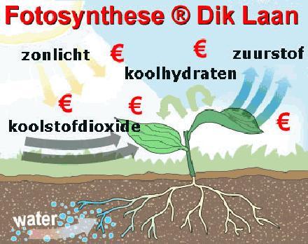 Fotosynthese ® Dik Laan