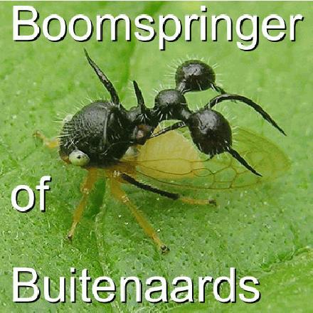 Buitenaardse wezens of Boomspringers