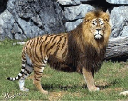 Barbary Leeuw