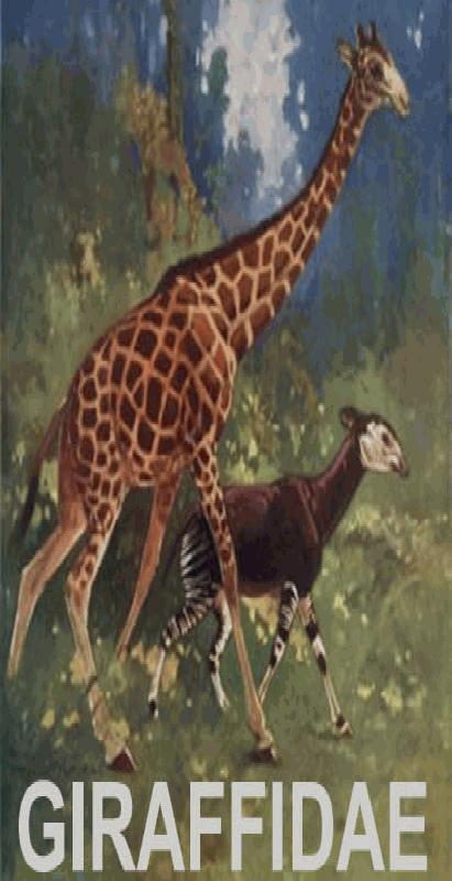 De Giraffe