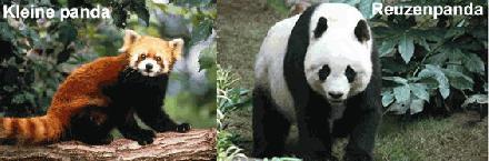 panda werkstuk