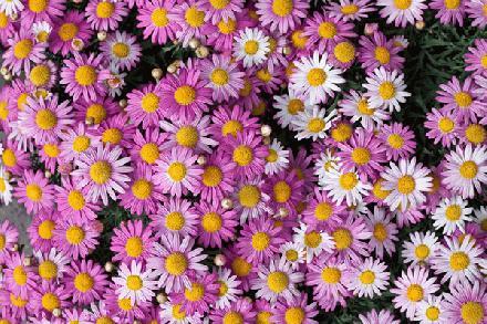 Gratis bloemen achtergrond
