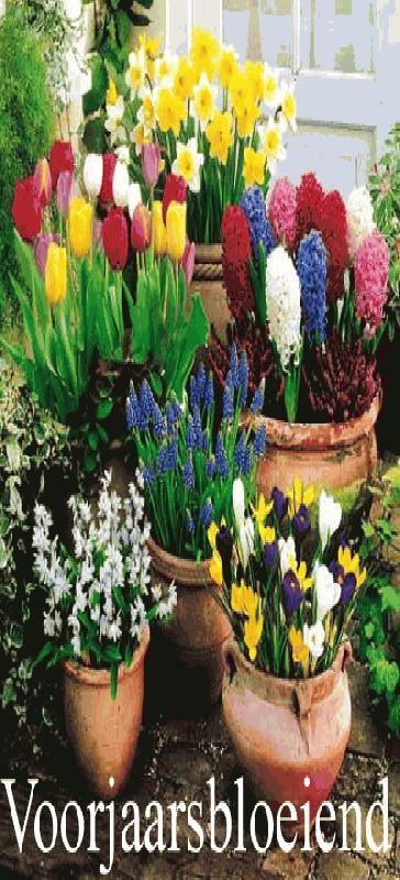 Goedkope bloembollen kweken