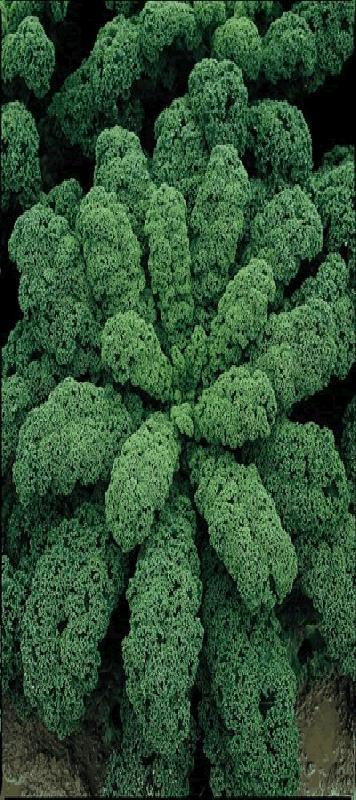 de gezondste groente