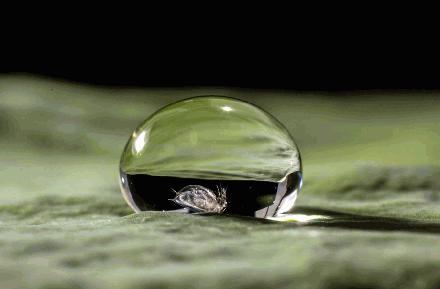 Natuurlijke bladluis bestrijding