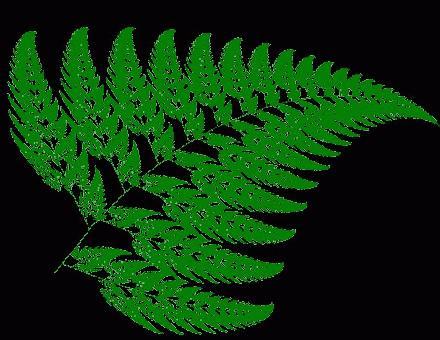 Varenblad fractal