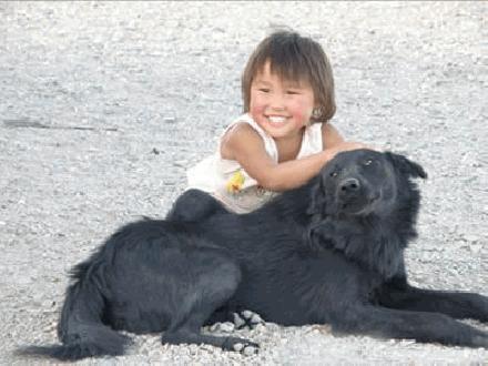 Chinese huishond
