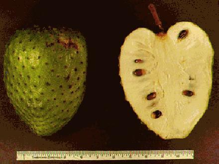 graviola vrucht