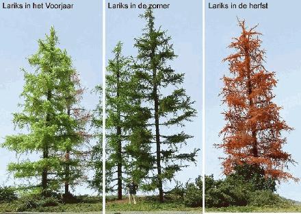 Lariks drie seizoenen
