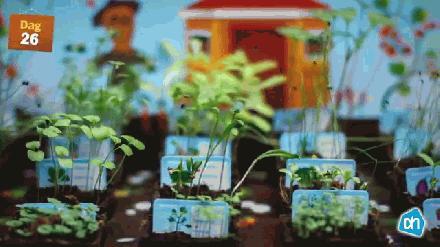 Albert Hein Paprika plantjes op kweken 2