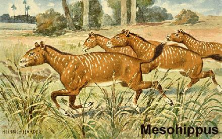 002 Mesohippus