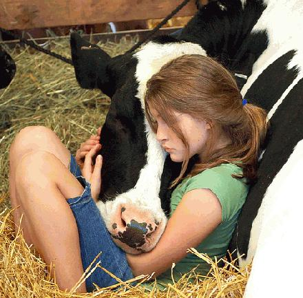 00 little girl with cow