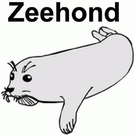 Zeehond (copyright Dik Laan)