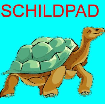 Schildpad spreekbeurt, Schildpad werkstuk.