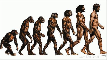 Anatomie Neanderthal en Mens